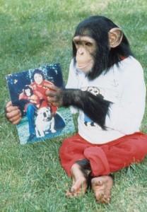 Michael Jackson's chimp Bubbles